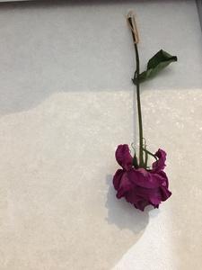 お花 -続き-